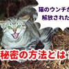 猫糞対策に番人くん?!実際使ったから分かる口コミ徹底検証