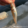 港内ファミリーフィッシングでキス釣り @豆アジは勘弁してくれーっ‼