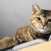 10月後半の #ねこ #cat #猫 どらやきちゃんB