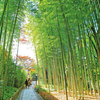 ライトアップで幻想的に…心静かに散策する伊豆・修善寺の竹林の小径