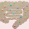 腸内細菌の役割