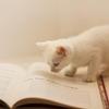 本を読むことは好きですか?