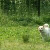 震災犬の帰宅