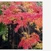 紅葉。。。🍁