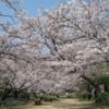 """満開の桜の""""なか""""です! #360pics"""