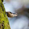 茨城県で日本初記録の鳥が記録されたらしいので迷鳥が出現する要因を説明していこうと思う