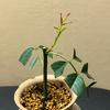 愛しき親友の植物たち