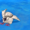 鳥系占い 4月19日 金曜日