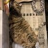 ホットカーペットは猫たちにとっても楽園💛