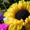 お花撮影。。。 (´∀`)