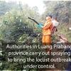 【ルアンパバーン県】バッタの大量発生で殺虫剤散布