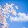 首相主催の「桜を見る会」に著名人1万8千人