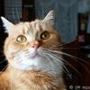 プリンス猫ヤマトのお食事皿