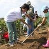 神戸市近郊の学生さん募集!!2月26日(日) 「親子農業体験・麦味噌づくり」