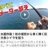 平戸の堤防シイラ動画!YouTubeちょい出演♪