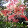 ※湯河原〝湯浴み〟温泉から箱根仙石原〝ススキの高原〟に遊んだ日のこと…