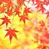 そろそろ紅葉の季節