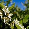 卯の花の渓のミヤマカワトンボとアサヒナカワトンボとシオヤトンボとダビドサナエ&「夏井いつきが一句鑑賞」に♪