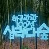 蔚山:雨の太和江十里竹林でマイナスイオンを吸い込む。