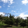 修善寺自然公園のもみじ林へ行こう!(静岡県 伊豆市)ここから戸田峠~天城峠へ道は続いている