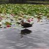 【緑区】「見沼自然公園」ほぼ自然!大きな園内で植物や生き物を観察しよう!