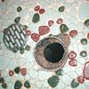 浴室排水改良1(床タイルの一部補修絡み例01)