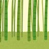 竹 あまりにも不思議な植物の特徴に迫る