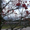 桜の次はハナミズキ