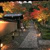 京都 紅葉今がみごろ   高台寺