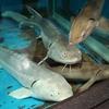 「京急油壺マリンパーク」暑すぎる夏には水族館がオススメ!