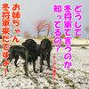 初雪!2014年11月05日