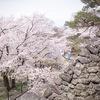 小諸「懐古園」名物。上から目線の桜見物。