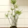 【真面目に】盆栽の繁殖方法について【解説】
