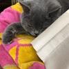 【妹と妹の友達がネコさんに会いに来ました。】ダイエット233日目(2月18日)