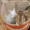 台風16号により、高知県高岡郡四万十町全域に避難勧告が発令されたので、ウサギと同行避難してみた