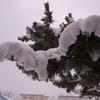【雑記】雪がだいぶ積もったと思ったら…