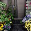 五月、わが家の花たち