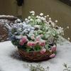 雪の日にうまれました〜!