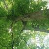食い逃げリスの(ちっこい)樹上画像