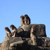 お手軽なサイズの動物園に癒された半日。市川市動植物園。