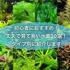 初心者におすすめ!丈夫で育て易い水草20選!タイプ別に紹介します