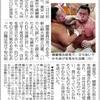モンゴル横綱が気に入らないならば,日本相撲協会は純ジャパ力士だけで運営すればよい,ハーフ(ダブル)力士はすでに何人もいるが