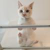 岐阜県大垣市にOPENした超おすすめの猫カフェ-のらら-norara