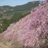 桜 満開ツーリング ②  高見の郷