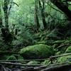 二項定理(binomial theorem)とランダムフォレスト(random forest)の関係って?