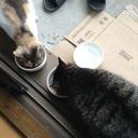 ベランダ猫のニケと銀。