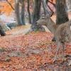 雨の奈良公園