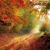 秋の野鳥観察はシギ・チドリが面白い!東京近郊の観察スポットも紹介