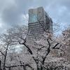 桜ノ宮で開花したばかりの桜を観てきました