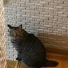 わが家の猫は「つちのこ?」。キジトラちゃんの背中が好き!
